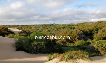 in randello hectares of unspoiled flora on the top of sandy dunes
